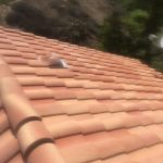 Roof cleaning in Orange County. Spray off years of dirt and debris from your home.